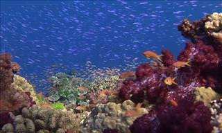The Beautiful Underwater Scenes of Fiji