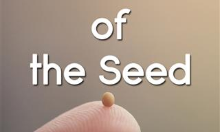 Be Inspired By the Law of the Seed