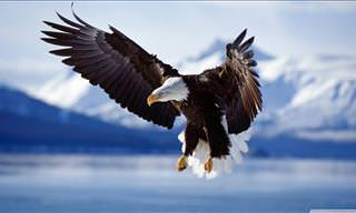 15 Beautiful Photos & Interesting Facts About Eagles