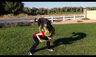 These Dogs Have Skills!