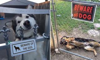 """The Dogs Behind """"Beware of the Dog"""" Signs"""