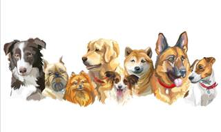 Animal Quiz: Can You Identify All These Dog Breeds?