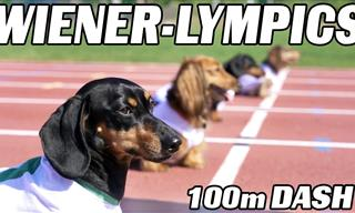 Watch These Adorable Little Dachshunds Run a 100m Dash