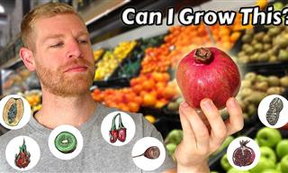 7 Fruits Trees You Can Grow From Store-Bought Fruits