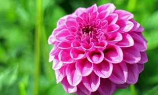 19 Gorgeous Summer Flowers