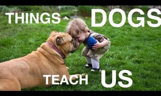 The Things that Dogs Teach Us...