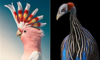 14 Vivid Portraits of Gorgeous Rare Birds by Tim Flach