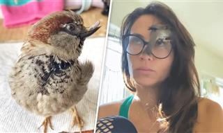This Sparrow Thinks He's a Puppy - Adorable!
