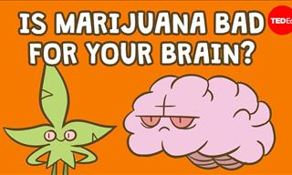 Does Weed Smoking Damage Our Brain?