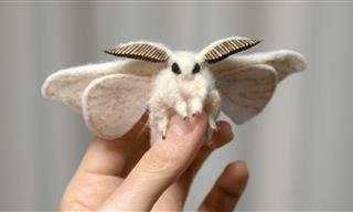 21 Most Incredible Moth Species