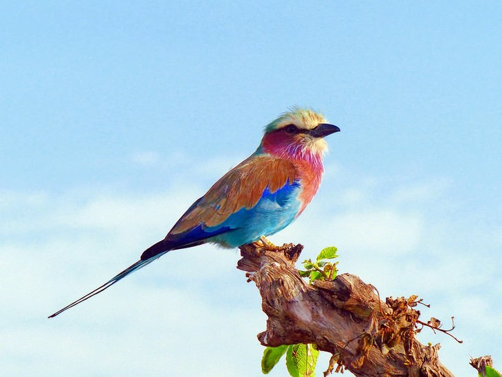 The World S Most Beautiful Exotic Birds