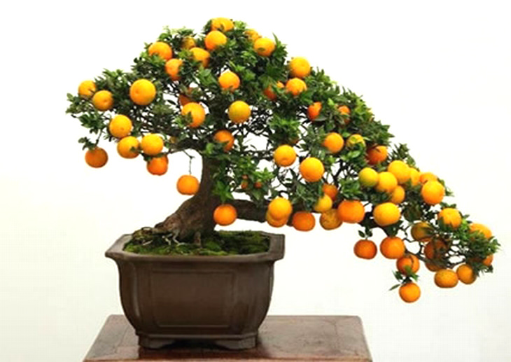 A Guide To Growing Bonsai Fruit Trees