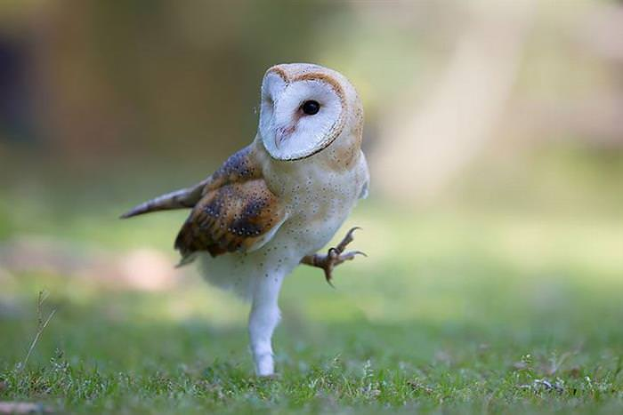 30 Beautiful Owls In Spectacular Nature Photograph
