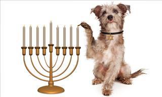 Einstein the Nice Jewish Dog