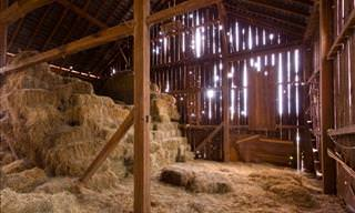 That Night in the Barn