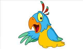 The Legless Parrot