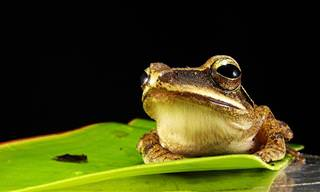 Marry a frog
