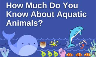 What Do You Know of Aquatic <b>Animals</b>?
