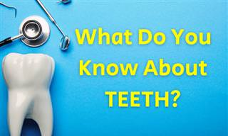 What Do You Know About Your Teeth?