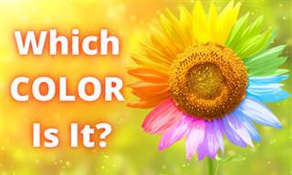 <b>Can</b> You Identify the <b>Colors</b>?