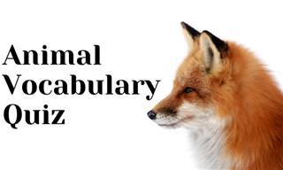 This Animal Quiz Will Really Test <b>Your</b> Vocabulary!