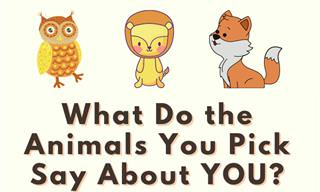 Pick the Animals and <b>Discover</b> Yourself
