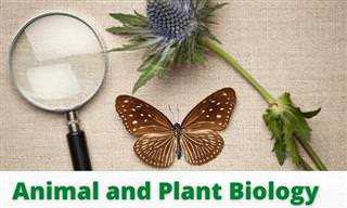 The Biology of Flora and Fauna