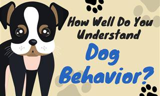 Do You Understand <b>Dog</b> Behavior?