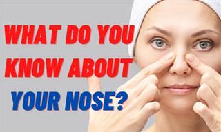 Do You Know Your Nose?