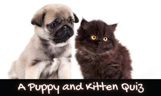 A <b>Puppy</b> and Kitten Quiz!