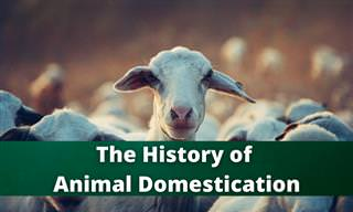 The History of Animal Domestication