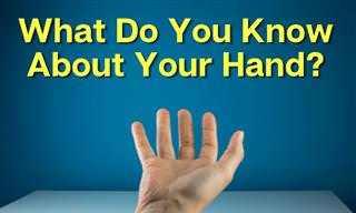 What Do You Know About Your <b>Hands</b>?