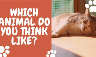 <b>What</b> Animal <b>Do</b> You <b>Think</b> Most Like?