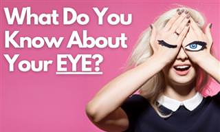 What Do You Know About Your <b>Eyes</b>?