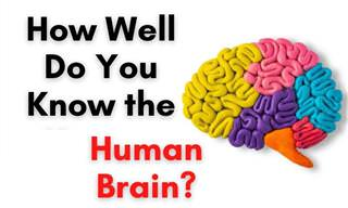<b>How</b> <b>Well</b> <b>Do</b> <b>You</b> Know the Brain?