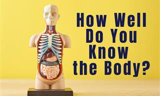 What Do You Know of the Human Body?