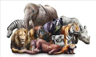 Only the Biggest Animal Lovers Can Pass This <b>Quiz</b>!