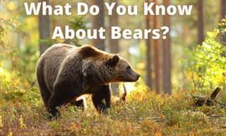<b>What</b> Do <b>You</b> Know About Bears?