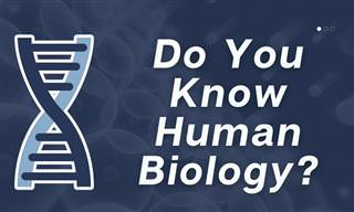 How Much Do You Know About Human <b>Biology</b>?