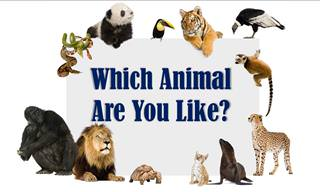Which <b>Animal</b> Character Is <b>Yours</b>?