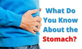 What Do You Know About the <b>Stomach</b>?