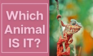 Tell Us: Which Animal IS IT?