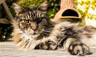 Do You Know All These <b>Cat</b> and Dog Breeds?
