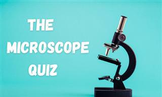 This Microscope <b>Quiz</b> Will Test Your Powers of Deduction!