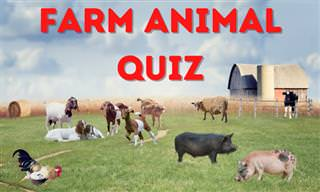 What Do You Know About Farm <b>Animals</b>?