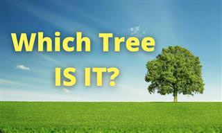 <b>Which</b> Tree IS IT?