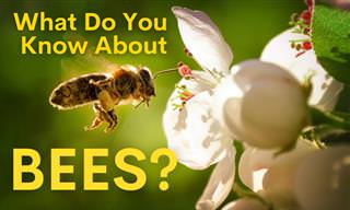 What Do You Know About Bees?