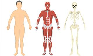 What Do <b>You</b> Know of Human Anatomy?