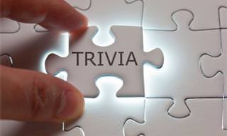Can We Sit You Down For a <b>Round</b> of <b>Trivia</b>?