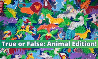 Are These <b>Animal</b> Facts True or False?